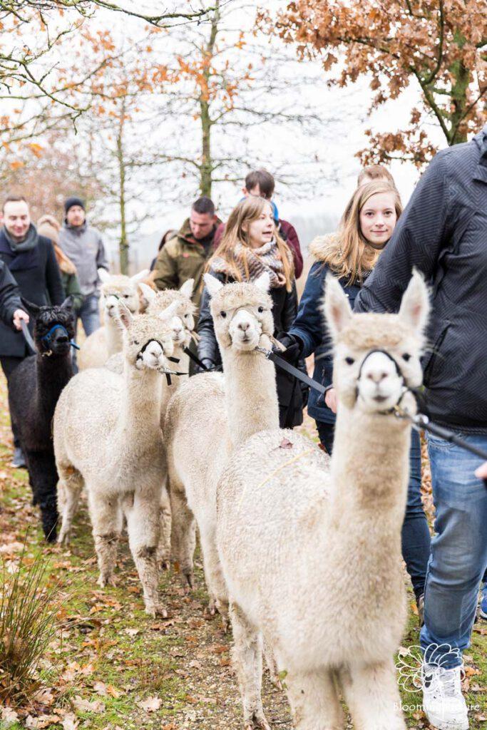 Alpacawandeling-3.12.17-Vorstenbosch_GGD_Blooming-Picture_10